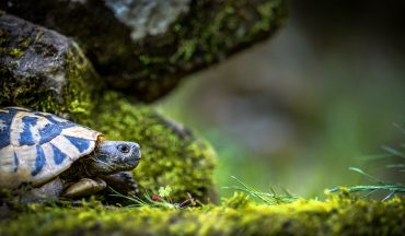 """Несносный Тук:  черепаха погоняла по саду собачку, которую """"нянчила""""  хозяйка"""