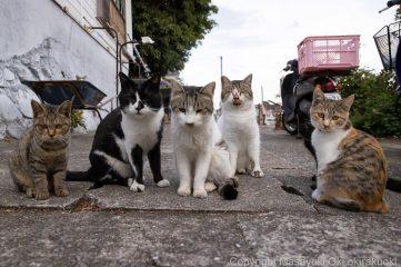 Захмарний рівень добрих кадрів: японський фотограф знімає вуличне життя бездомних котів