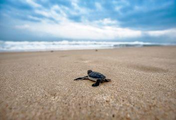В Ізраїлі черепах рятують від отруєння мазутом за допомогою майонезу