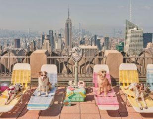 Собаки Нью-Йорка: фотограф створив проєкт із гламурними песиками